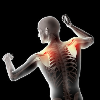 強調表示された肩甲骨を持つ3d男性医療図