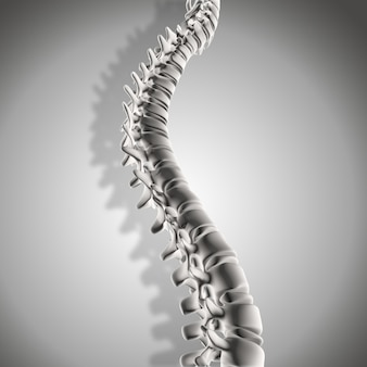 3dは、脊椎のクローズアップのレンダリング