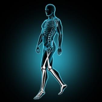3d мужская медицинская фигура, идущая с костями ног