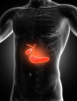 胆道を示す3d医療画像