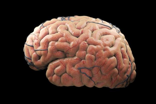 現実的な脳の概念を閉じます。 3dレンダリング。