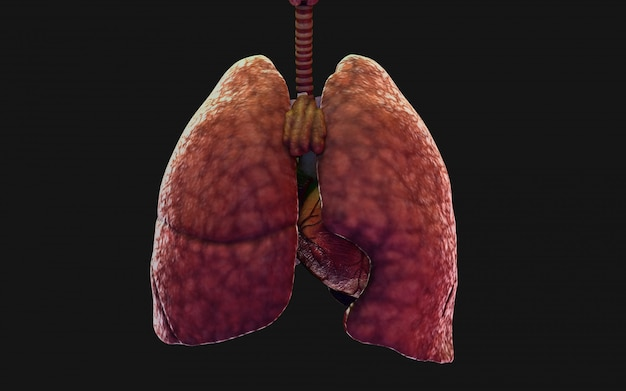 3d иллюстрации люди легких и дыхательной системы. нков в китае иллюстрации концепции.