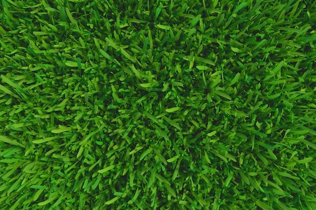 草背景テクスチャ。新鮮な草。 3dレンダリング。