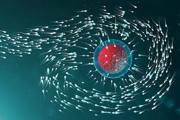 3d иллюстрации спермы и яйцеклетки, яйцеклетка. сперма приближается к яйцеклетке. нативное и натуральное оплодотворение. концепция начала новой жизни. яйцеклетка с красным ядром под микроскопом, движение спермы