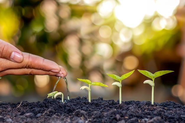 자연 속에서 나무가 자라는 4 단계와 아름다운 아침 햇살, 식물 성장과 자연 안정의 개념.