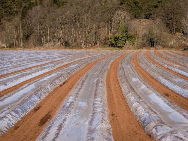 4月初旬のノルウェーの野外の植物用のプラスチック保護ストリップで接地します。