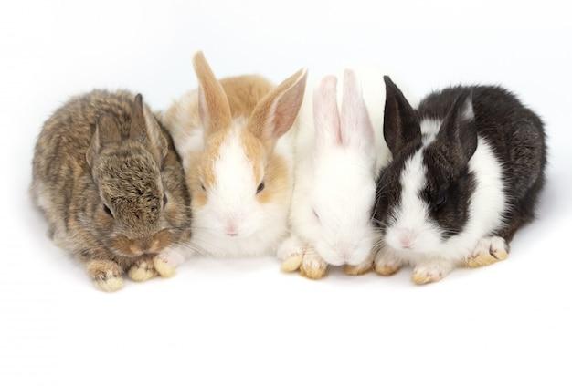 分離された白の4つのかわいい赤ちゃんウサギ