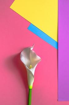 4つのトーンのカラフルな色は、黄色、ピンク、バイオレット、ライトブルーの背景色です。