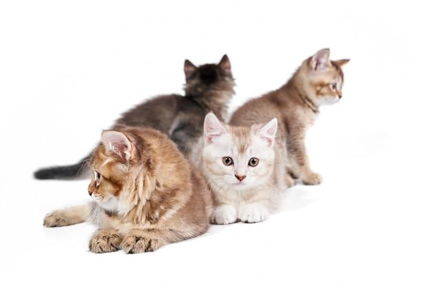 4匹の子猫の正面図。