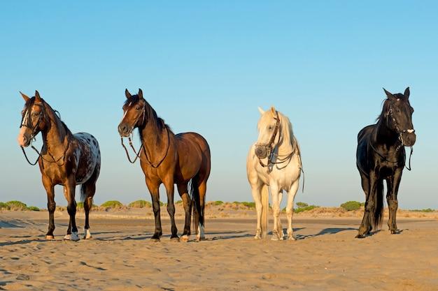 ビーチで4頭の馬