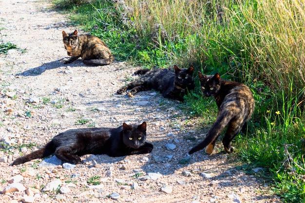 4匹のかわいい猫が草の中に横たわっています。夏の日。