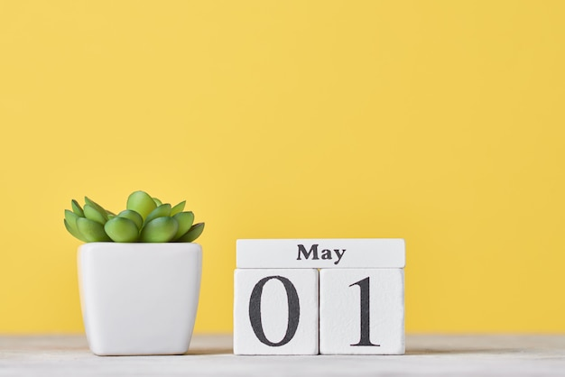 5月1日の日付と黄色の背景に鍋に多肉植物の木製ブロックカレンダー。労働者の日のコンセプト