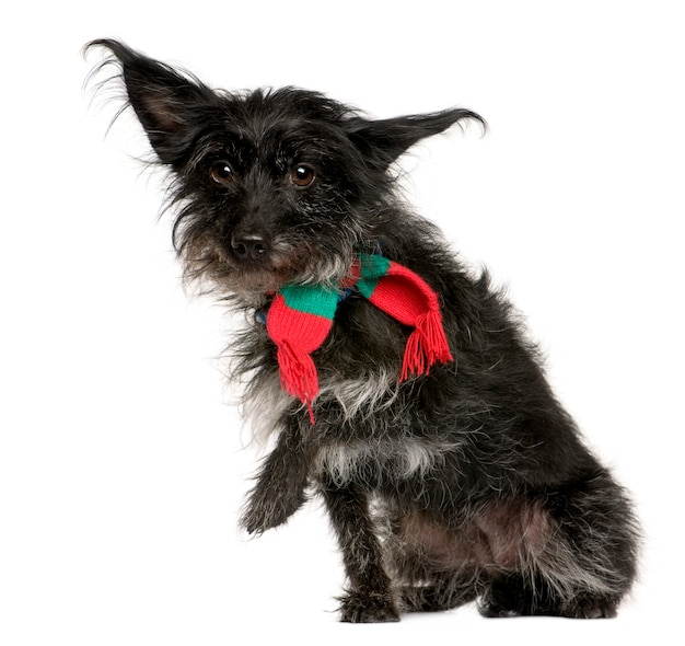 Скрещивать с шарфом с 5 лет. портрет собаки изолированный