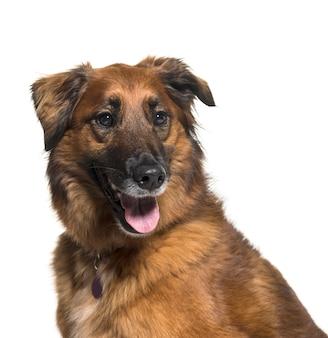 雑種犬(5歳)