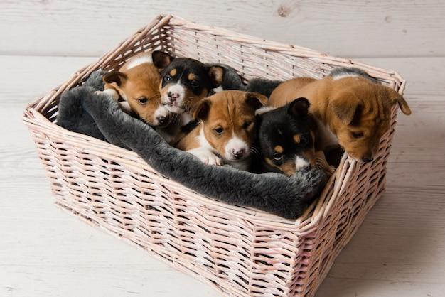 バスケットの5つのかわいいバセンジーの子犬の上からの眺め
