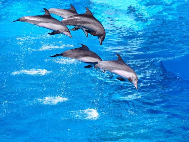 5つの美しいイルカは、自然の背景のためのプールで水の上にジャンプ
