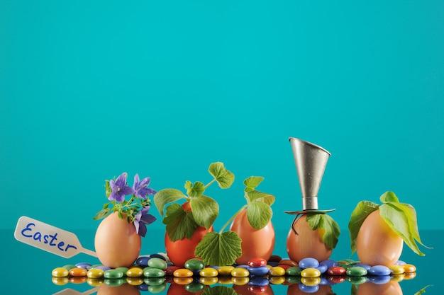 ターコイズ、エコ園芸のイースターエッグの5つの有機苗。