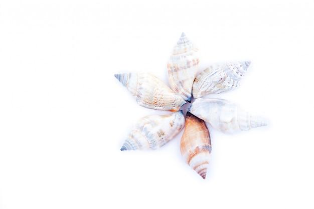 円を形成する6つの貝類
