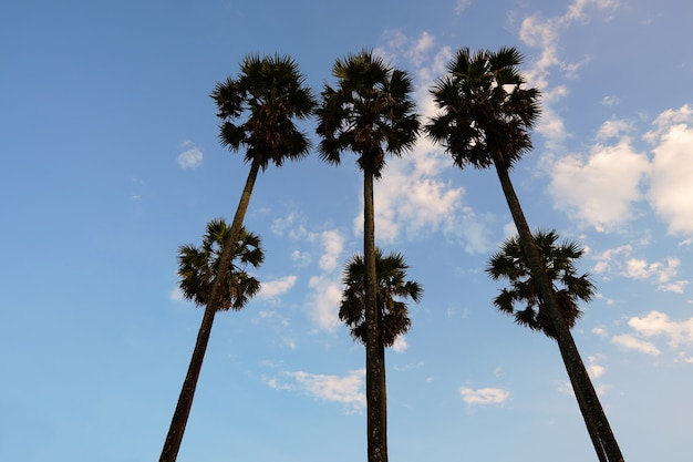 夕日にシルエット6ヤシの木