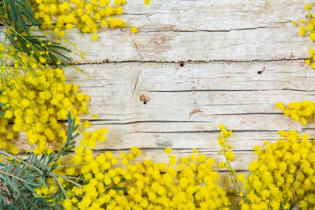 Цветы мимозы на деревянной предпосылке. 8 марта, женский день символ и весна.