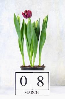 8 марта, международный женский день. деревянный вечный календарь и тюльпаны.