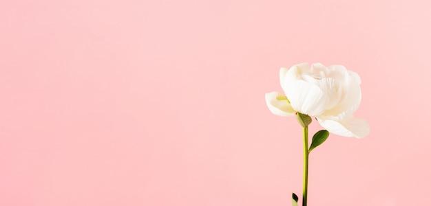 Крупный план пиона на розовой предпосылке с космосом. макет открытки на свадьбу, день матери, 8 марта, день святого валентина.