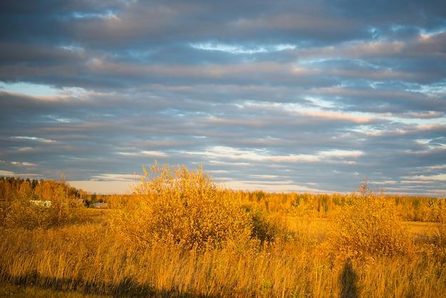 夕方、ロシア、ウラル、9月に黄ばんだ草のフィールドの秋の風景