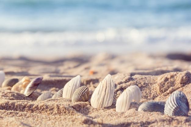 砂の中の貝殻