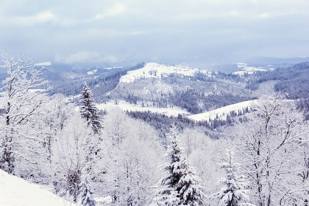 山の冬の森
