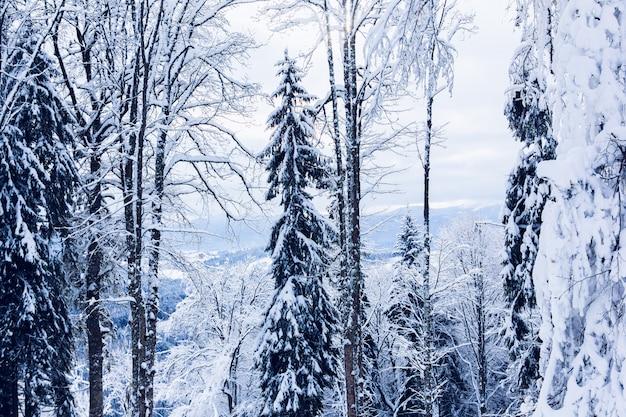 雪に覆われた冬の森