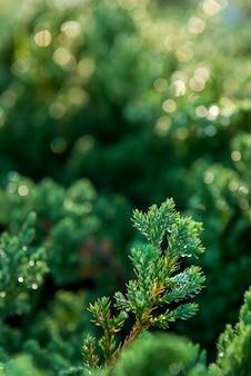 緑の苔背景テクスチャ自然の中で美しい