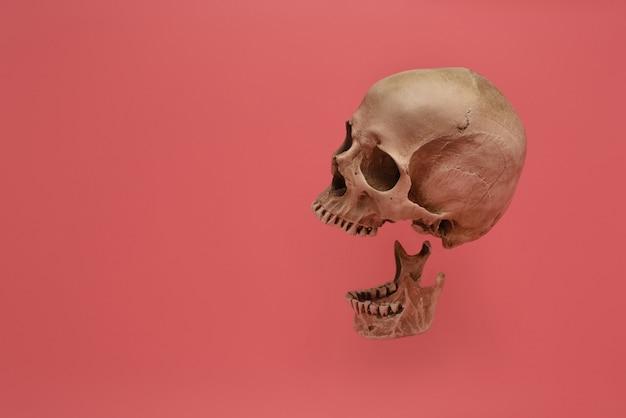 Человеческий череп изолированный на розовой предпосылке.
