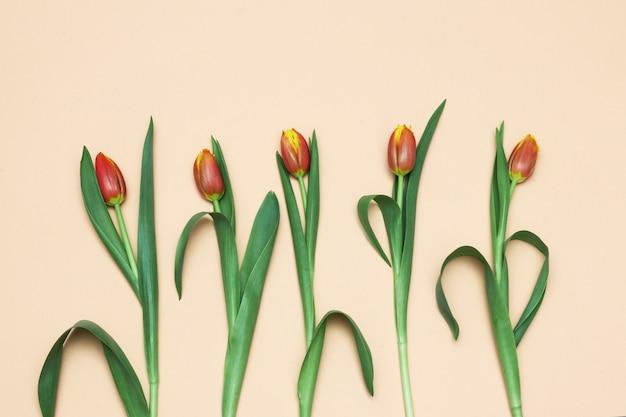 オレンジ色の背景上の花チューリップ