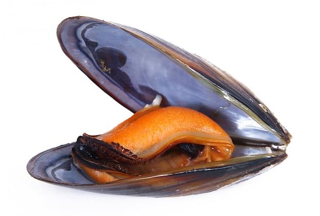 孤立した新鮮なムール貝