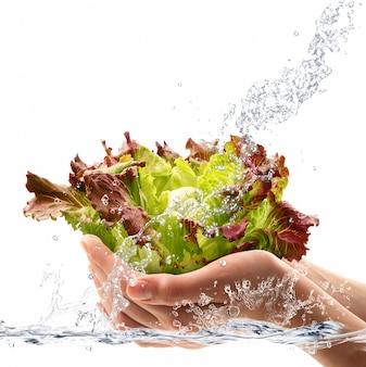 新鮮なサラダ手持ちの水に落ちる
