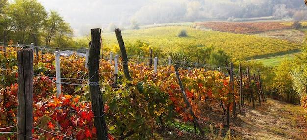 イタリアのブドウ園の秋の風景