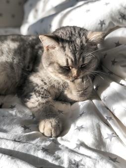 灰色の猫は彼の足をなめる