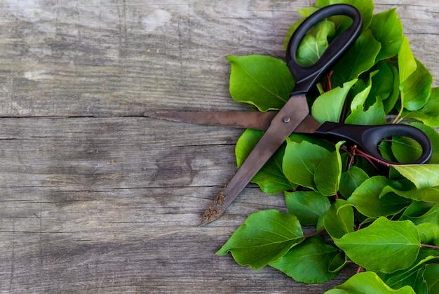 園芸はさみと素朴なテーブルの上の緑の枝。ガーデニングタイム。