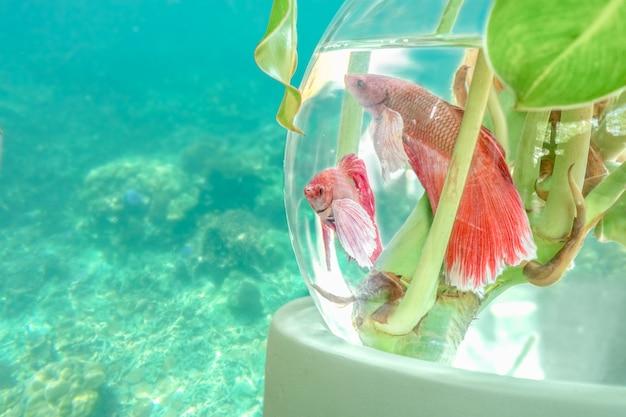 水中で金魚鉢に魚します。