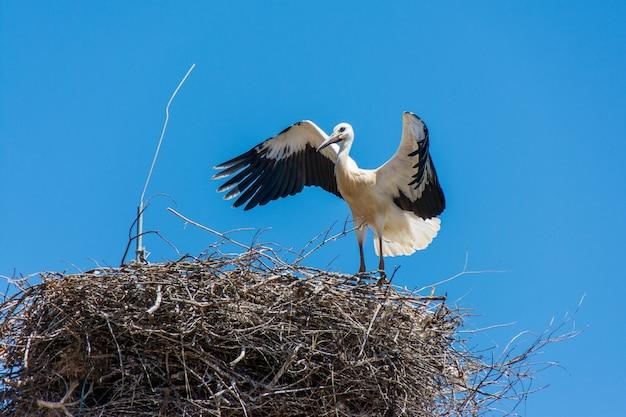 ポルトガル、アルガルヴェ地方の電柱の枝から成っている大きな巣のコウノトリ