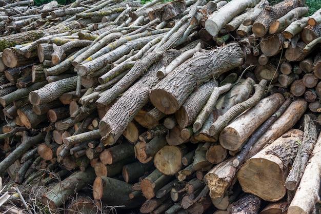 森の端に挽きたての木