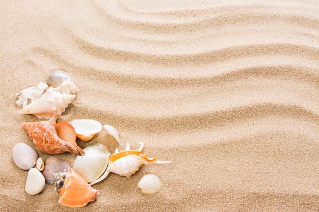 ビーチで貝殻。熱い砂と夏の背景