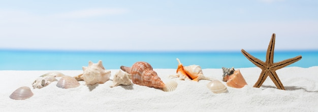 白い砂とバナー夏の背景。ビーチで貝殻とヒトデ。