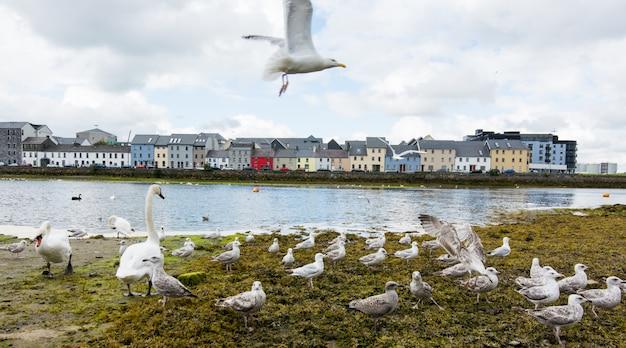 アイルランド、ゴールウェイ市、コリブ川の風景