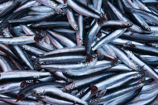 Катания, сицилия, италия. сардины, типичная рыба средиземного моря, продающаяся на сицилийских рынках.