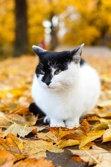黄色の葉と秋の公園で座っている黒と白の猫
