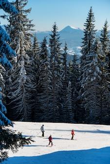 スキーヤーは強大な森の中のスキーリゾートルートを行く