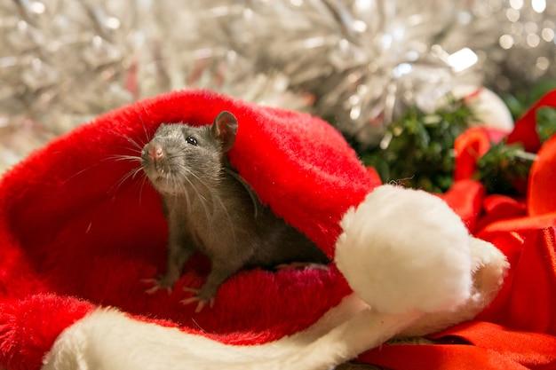 Серая мышь гуляет среди новогодних атрибутов. животное готовится к рождеству.