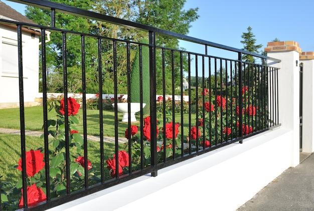 フェンスの後ろにある花の咲くバラを閉じて庭を埋めました