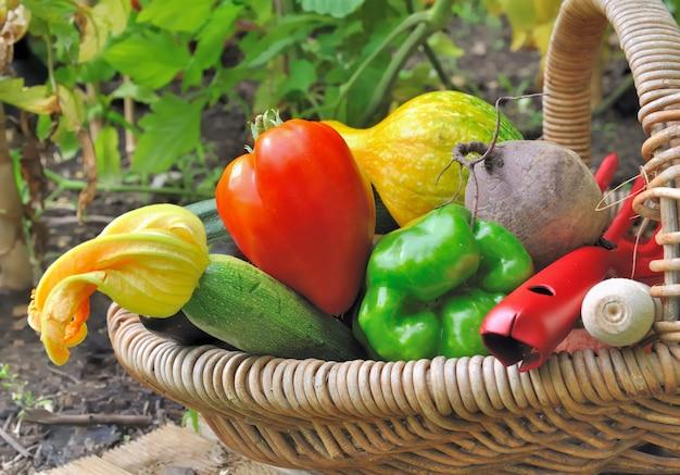 かごの中のカラフルな野菜
